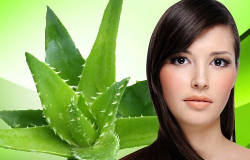 ventajas de la sabila para el cabello