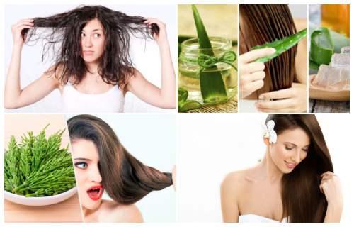 remedios caseros para el cabello grasoso y maltratado