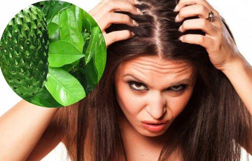 como preparar las hojas de guanabana para el cabello