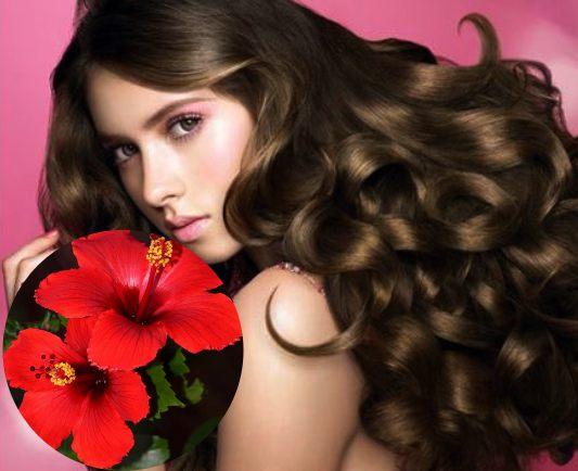 flor de jamaica para el cabello