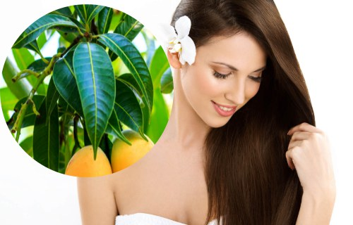 mascarilla de hojas de mango para el cabello