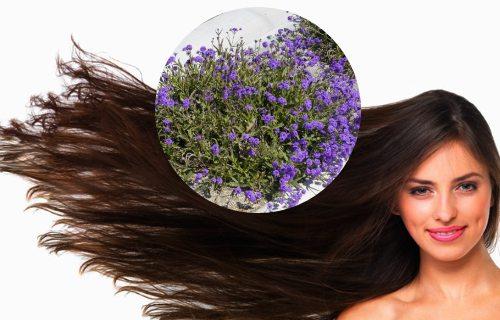 verbena para el cabello beneficios