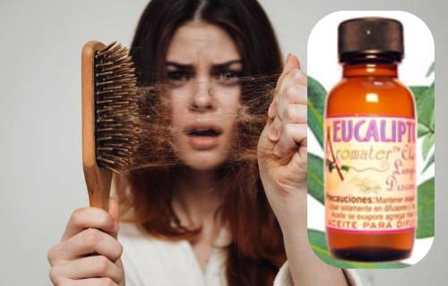 beneficios del aceite d eucalipto